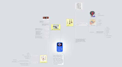 Mind Map: Evolución y Desarrollo del Cerebro