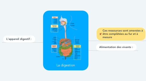 Mind Map: La digestion