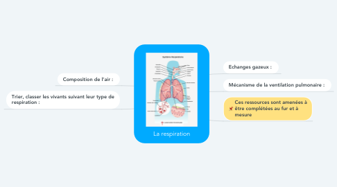 Mind Map: La respiration