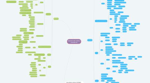 Mind Map: Anatomía del sistema reproductor