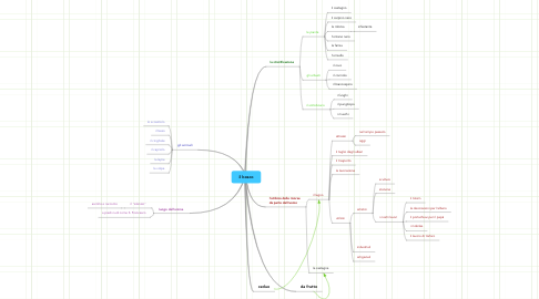 Mind Map: il bosco