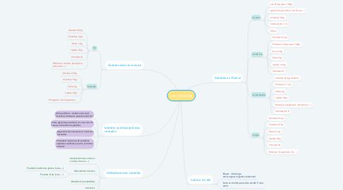 Mind Map: Les céréales