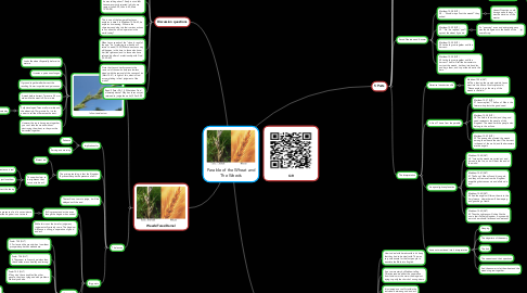 Mind Map: Parable of the Wheat and The Weeds