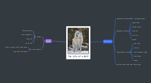 Mind Map: The Life of a Wolf