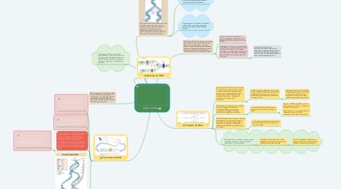 Mind Map: DNA E RNA