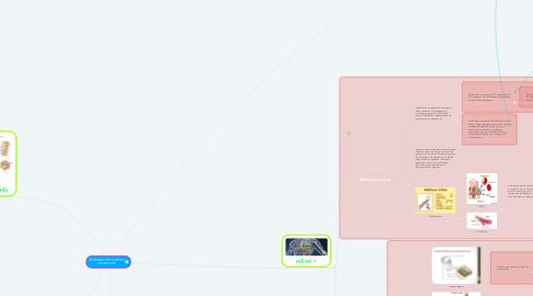 Mind Map: SISTEMA OSTEO ARTRO MUSCULAR