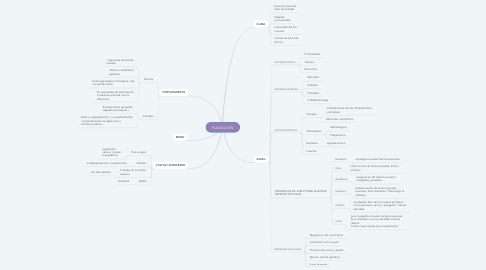 Mind Map: PLANTACION