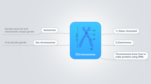 Mind Map: Chromosomes