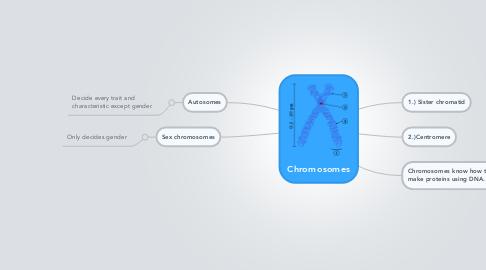 Mind Map: Chromosomes