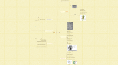Mind Map: 2.3 Eukaryotic Cells