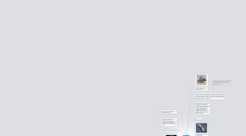 Mind Map: La tautologia darwinista.