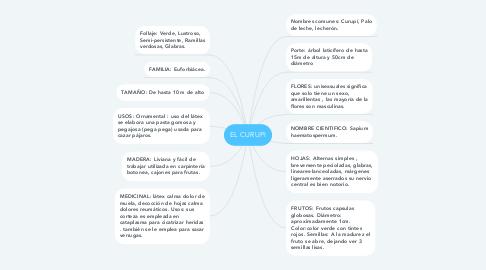 Mind Map: EL CURUPI