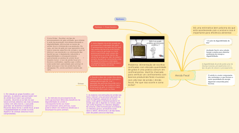 Mind Map: Amido Fecal