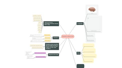 Mind Map: Système endocrinien