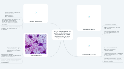 Mind Map: TECIDOS FUNDAMENTAIS podem ser definidos como agrupamentos de células que apresentam formas e funções semelhantes
