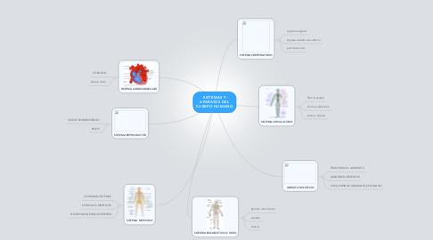 Mind Map: SISTEMAS Y APARATOS DEL CUERPO HUMANO