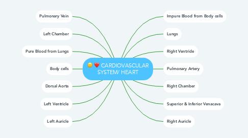 Mind Map: CARDIOVASCULAR SYSTEM/ HEART
