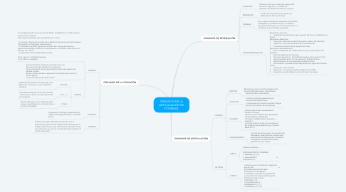 Mind Map: ORGANOS DE LA ARTICULACIÓN DE FONÉMAS