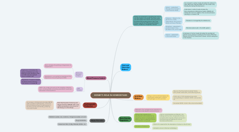 Mind Map: KIDNEY'S ROLE IN HOMEOSTASIS