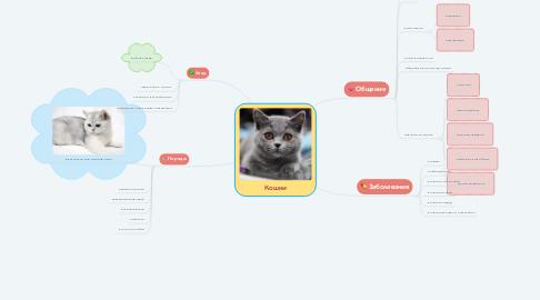 Mind Map: Кошки