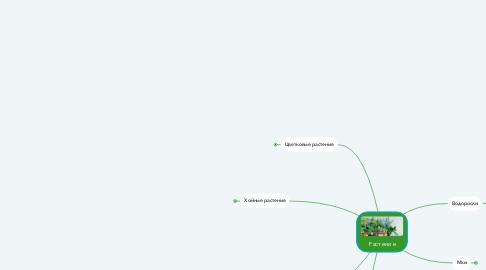 Mind Map: Растение