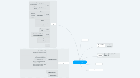 Mind Map: The Respiratory System