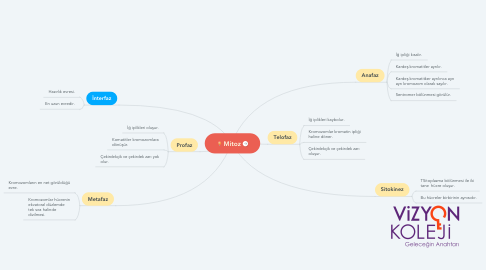 Mind Map: Mitoz