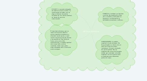 Mind Map: MEDULA ESPINHAL