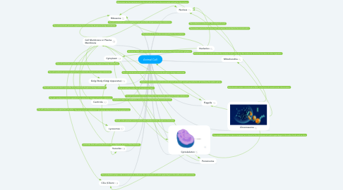 Mind Map: Animal Cell