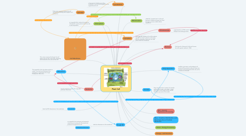 Mind Map: Plant Cell