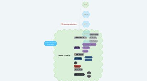 Mind Map: CANLILARIN TEMEL BİLEŞENLERİ