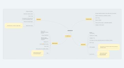 Mind Map: HONGOS