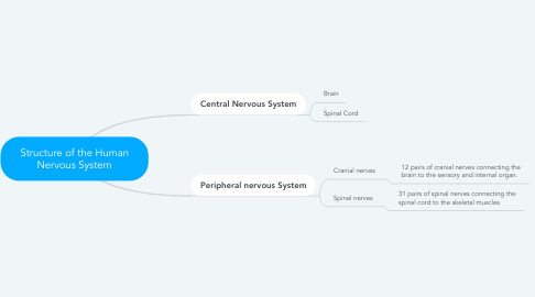 Mind Map: Structure of the Human Nervous System