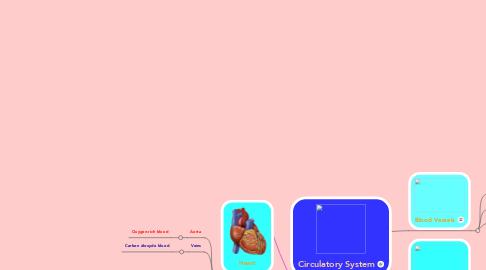 Mind Map: Circulatory System