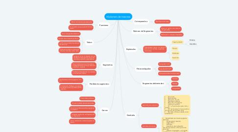Mind Map: Abdomen de insectos