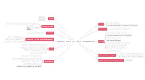 Mind Map: ANATOMÍA Y FISIOLOGÍA DEL CEREBRO Y SISTEMA NERVIOSO