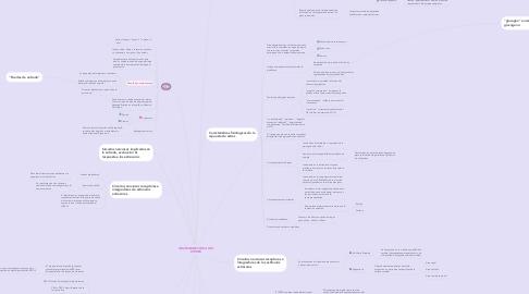 Mind Map: NEUROANATOMIA DEL ESTRES