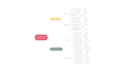 Mind Map: Cronología de la erupción dental