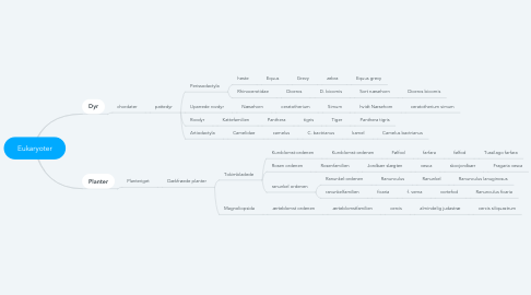 Mind Map: Eukaryoter