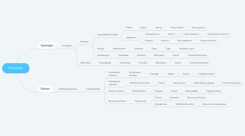 Mind Map: Eukayoter