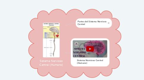 Mind Map: Sistema Nervioso Central (Humano)