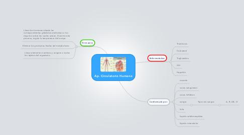 Mind Map: Ap. Circulatorio Humano