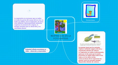 Mind Map: RESPIRACION EN LA FOTOSINTESIS