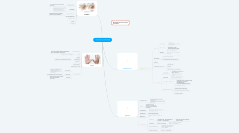 Mind Map: MIEMBRO SUPERIOR