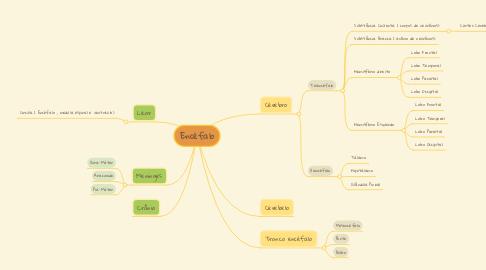 Mind Map: Encéfalo