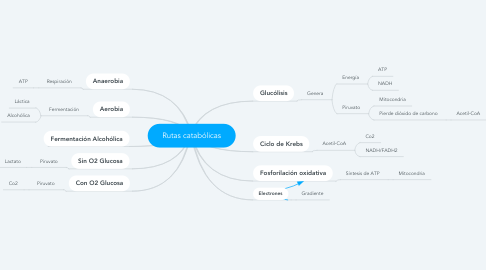 Mind Map: Rutas catabólicas