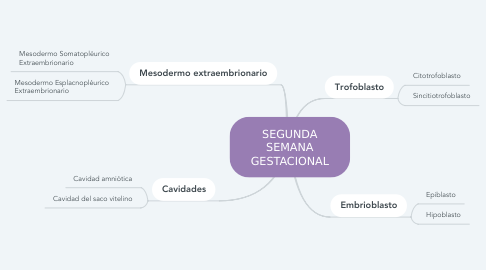 Mind Map: SEGUNDA SEMANA GESTACIONAL