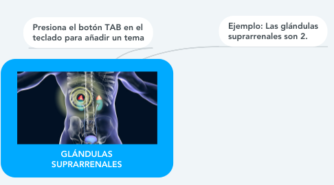 Mind Map: GLÁNDULAS SUPRARRENALES