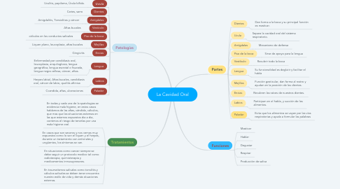 Mind Map: La Cavidad Oral