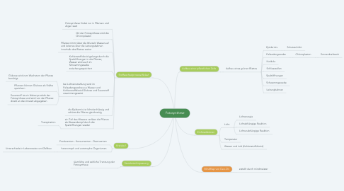 Mind Map: Fotosynthese
